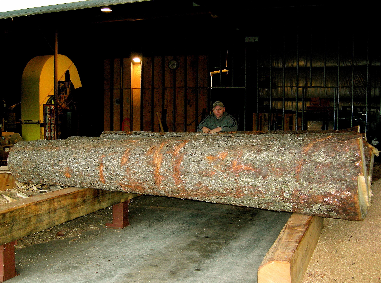 Paul Platts - Red Spruce Log
